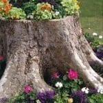 Ağaç Kütüğünde Teraryum 34