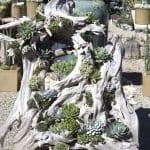 Ağaç Kütüğünde Teraryum 43