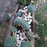 Ağaç Kütüğünde Teraryum 56