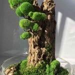 Ağaç Kütüğünde Teraryum 5