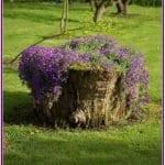 Ağaç Kütüğünde Teraryum 65