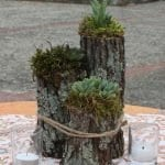 Ağaç Kütüğünde Teraryum 76