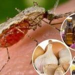 Sivrisinekten Nasıl Korunulur?