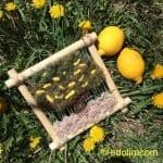 Dokuma Ağaç Modelleri - Dimensional Weaving #woventreehanging 11