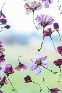 Çiçek Çerçevesi Yapımı 12