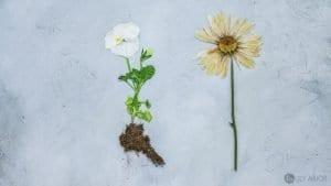 Çiçek Çerçevesi Yapımı 5