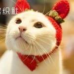 Kedi Kıyafetleri Örgü Modelleri Yapılışı 5