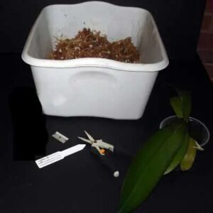 Orkide Saksı ve Toprak Değişimi 2
