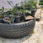 Araba Lastiği ile Bahçe Dekorasyonu 12