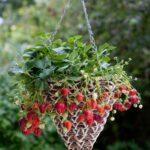 Organik Bahçecilik Fikirleri 9