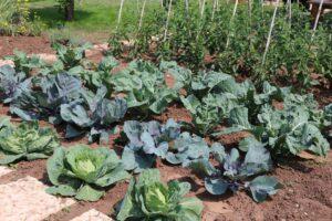 Organik Bahçecilik Fikirleri 98