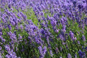 Organik Bahçecilik Fikirleri 100