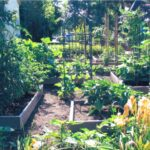 Organik Bahçecilik Fikirleri 101