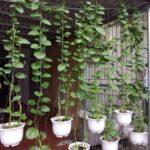 Organik Bahçecilik Fikirleri 10