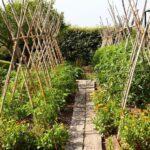 Organik Bahçecilik Fikirleri 12