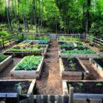 Organik Bahçecilik Fikirleri 13