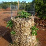 Organik Bahçecilik Fikirleri 14