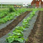 Organik Bahçecilik Fikirleri 16