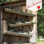 Organik Bahçecilik Fikirleri 17