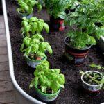 Organik Bahçecilik Fikirleri 18