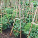 Organik Bahçecilik Fikirleri 19