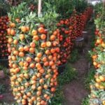 Organik Bahçecilik Fikirleri 21