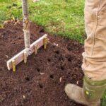 Organik Bahçecilik Fikirleri 22