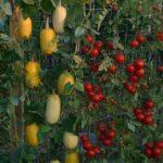 Organik Bahçecilik Fikirleri 23
