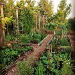 Organik Bahçecilik Fikirleri 24
