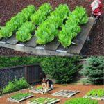 Organik Bahçecilik Fikirleri 26