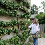 Organik Bahçecilik Fikirleri 27
