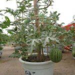 Organik Bahçecilik Fikirleri 33