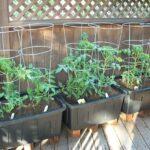 Organik Bahçecilik Fikirleri 35