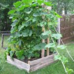 Organik Bahçecilik Fikirleri 36