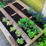 Organik Bahçecilik Fikirleri 37