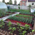Organik Bahçecilik Fikirleri 38