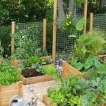Organik Bahçecilik Fikirleri 39