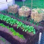 Organik Bahçecilik Fikirleri 40