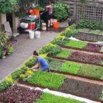 Organik Bahçecilik Fikirleri 41