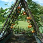 Organik Bahçecilik Fikirleri 43