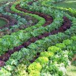 Organik Bahçecilik Fikirleri 44