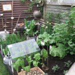 Organik Bahçecilik Fikirleri 45