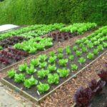 Organik Bahçecilik Fikirleri 46