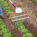 Organik Bahçecilik Fikirleri 4
