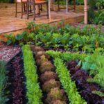 Organik Bahçecilik Fikirleri 49