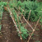 Organik Bahçecilik Fikirleri 51