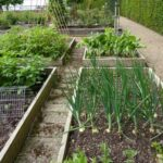 Organik Bahçecilik Fikirleri 52