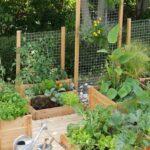 Organik Bahçecilik Fikirleri 53