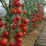 Organik Bahçecilik Fikirleri 54