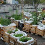 Organik Bahçecilik Fikirleri 55